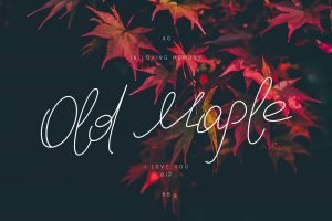 Old Maple Font Free Download